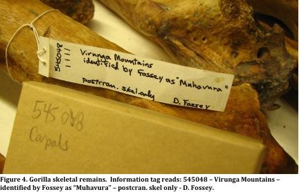 D. Fossey tag bone